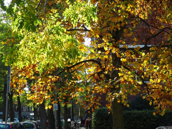 The Fall in Holland